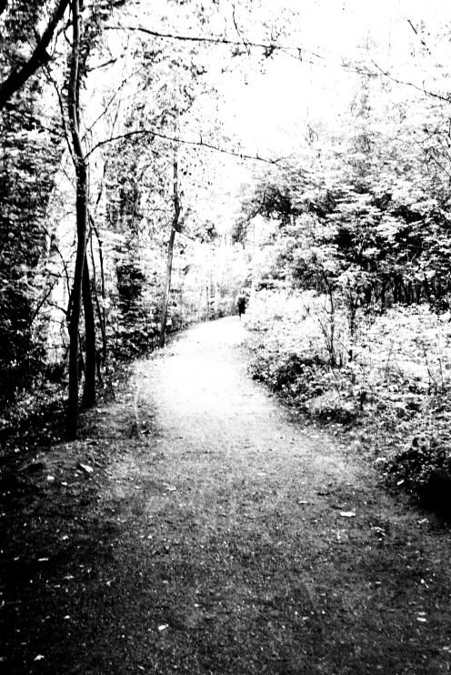 series [ walk ]